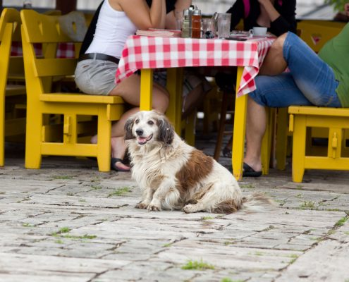 Uit eten met je hond? Happy dog at restaurant