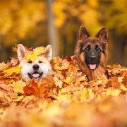 10 tips voor een heerlijke herfstwandeling