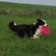 Review duurzame Beeztees Dogfrisbee