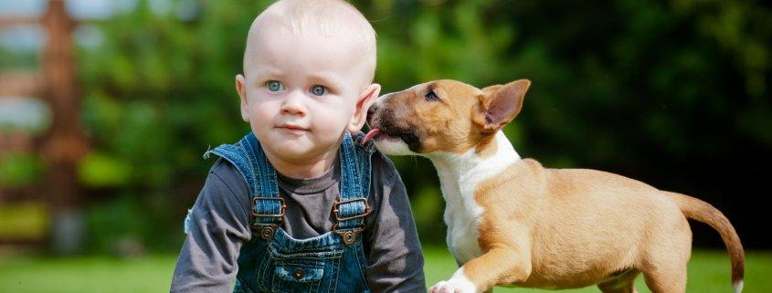 Imitatiegedrag van honden. Natuurlijk of aangeleerd?