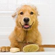 Hond wassen? Deze tips maken wassen makkelijk en leuk!