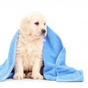 Hond na wassen afdrogen met handoek