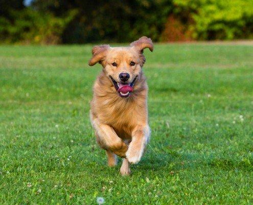 6 tips over de gezondheid van je hond