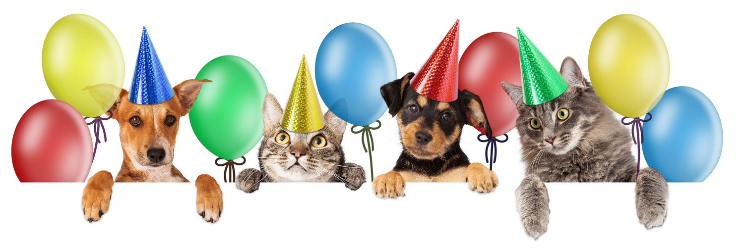 Happy Birthday With Cats And Dogs