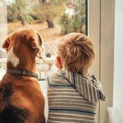 Binnenspelen in de winter: labrador met jongetje