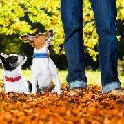 Weetjes over honden: in het bos met baasje