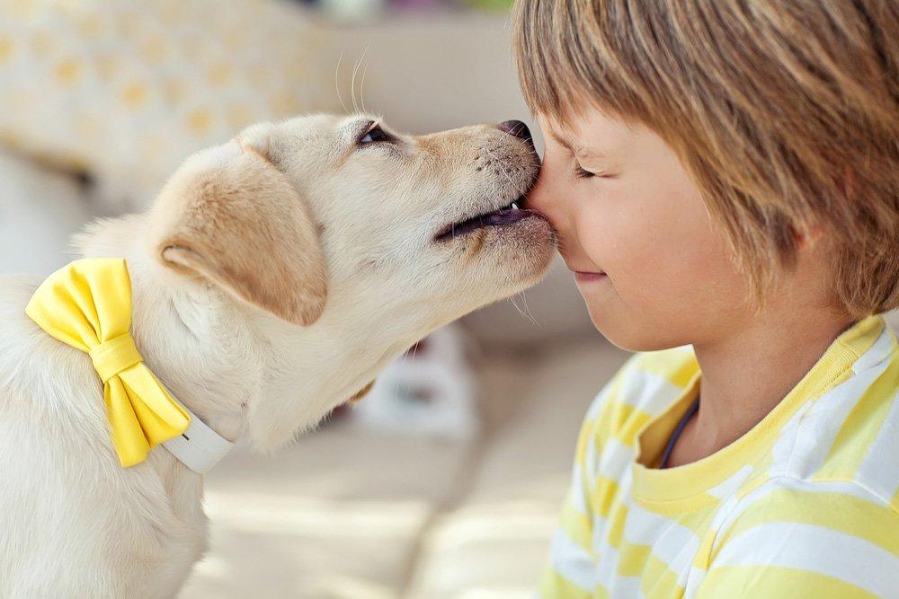 Gezinshonden: welke zijn er? Beeztees maakt de selectie: Labrador met jongetje