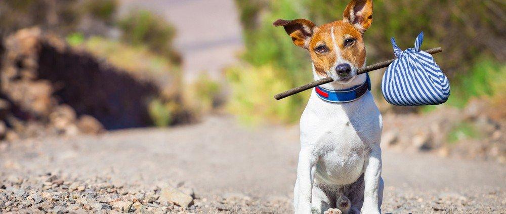 Weekendje weg met hond: met stok op vakantie (dog)
