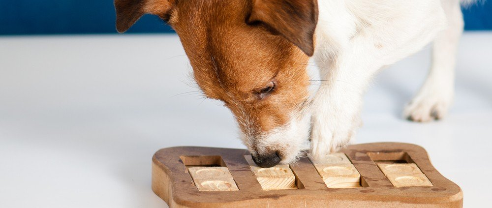 Denkspelletjes voor honden: Dog playing with braingame