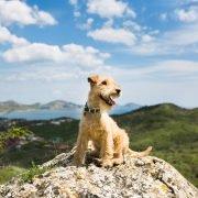 Hond mee naar Frankrijk: Dog on rocks