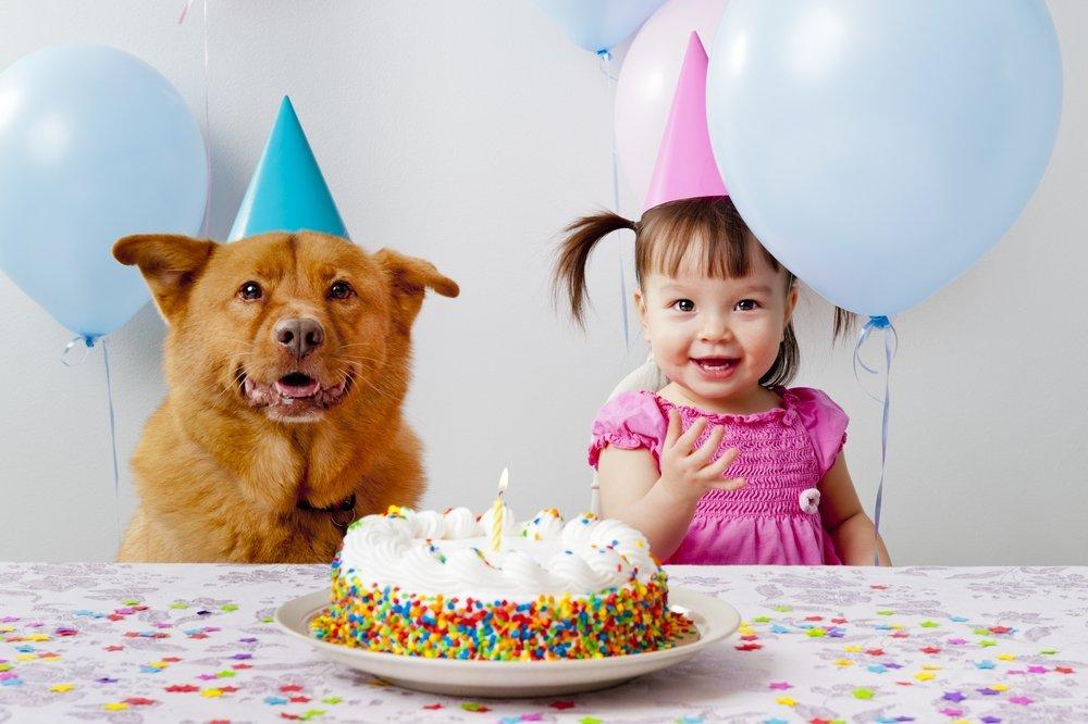 Honden cadeaus, hieperdepiep hoera: hond en meisje aan de taart
