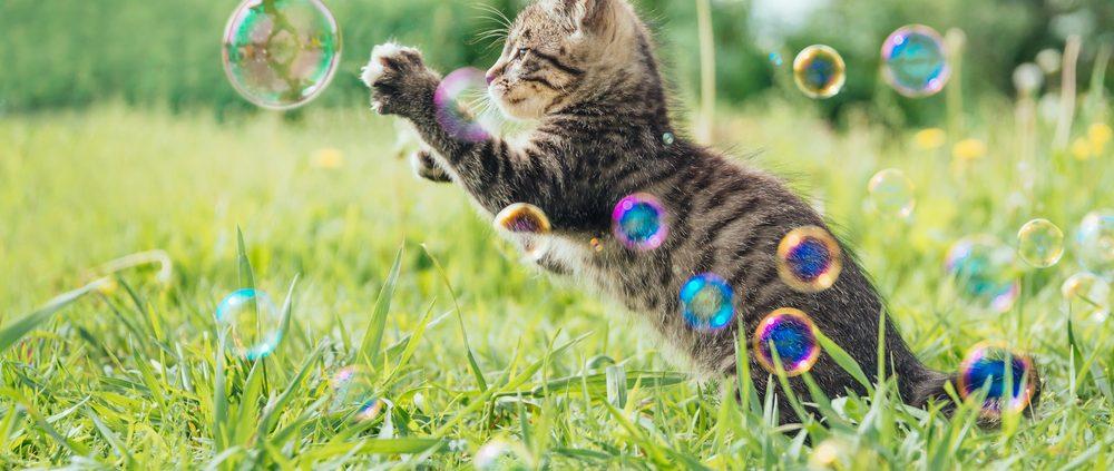 Kitten opvoeden, een nieuw gezinslid: kitten grijpt naar bellenblaas