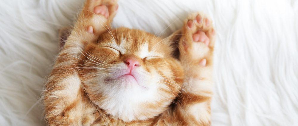 Wat heb je nodig voor een kitten