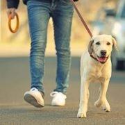 Hoe vaak hond uitlaten: Man with dog