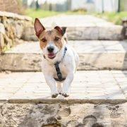 Wandelvakantie met je hond: cute dog jumping on beach
