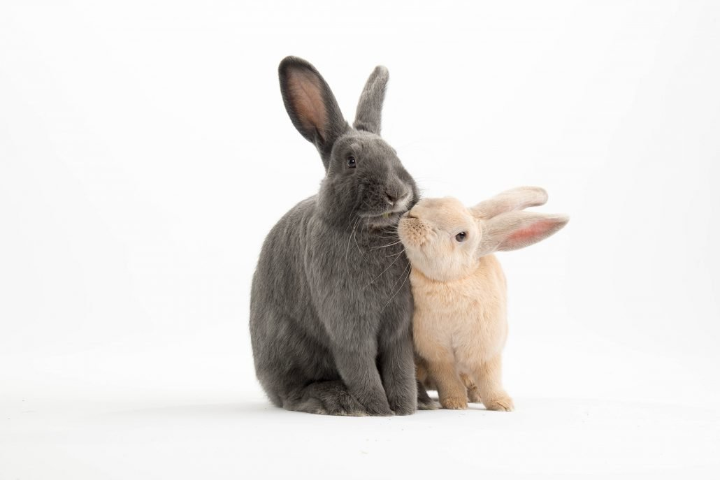 een extra konijn