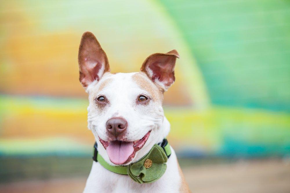 Kunnen honden lachen?
