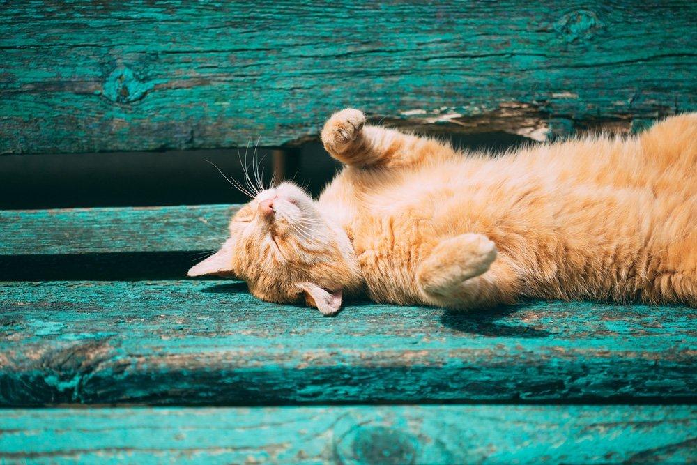 Katten beschermen tegen de warmte