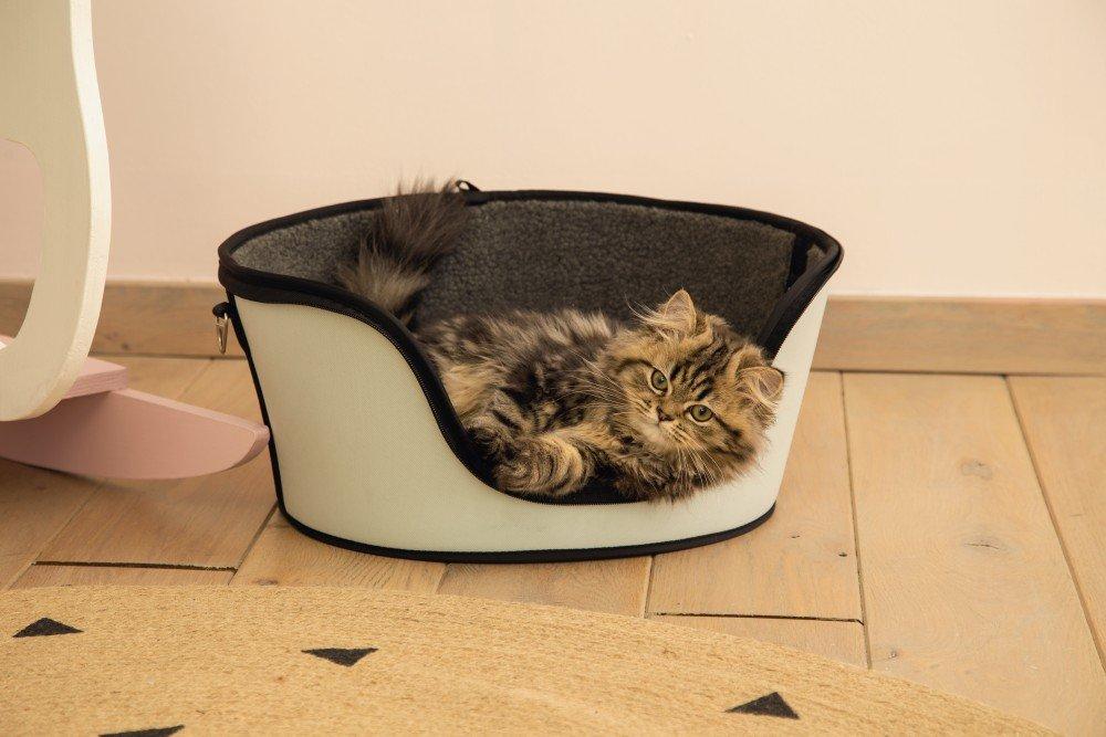 Zal ik een kitten kopen?
