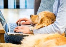Thuiwerken met je hond