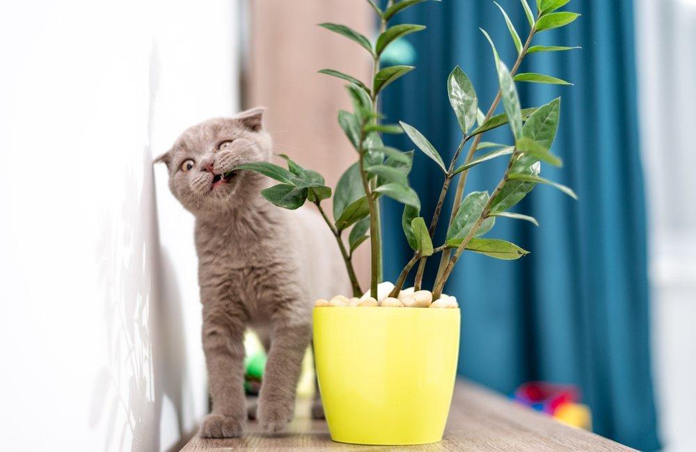 Kittenproof huis
