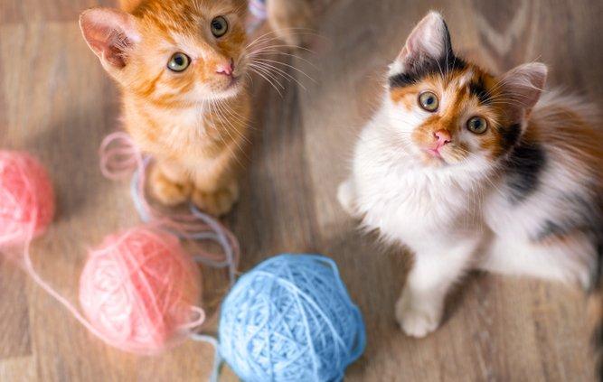 Wanneer wordt jouw kitten een kat?