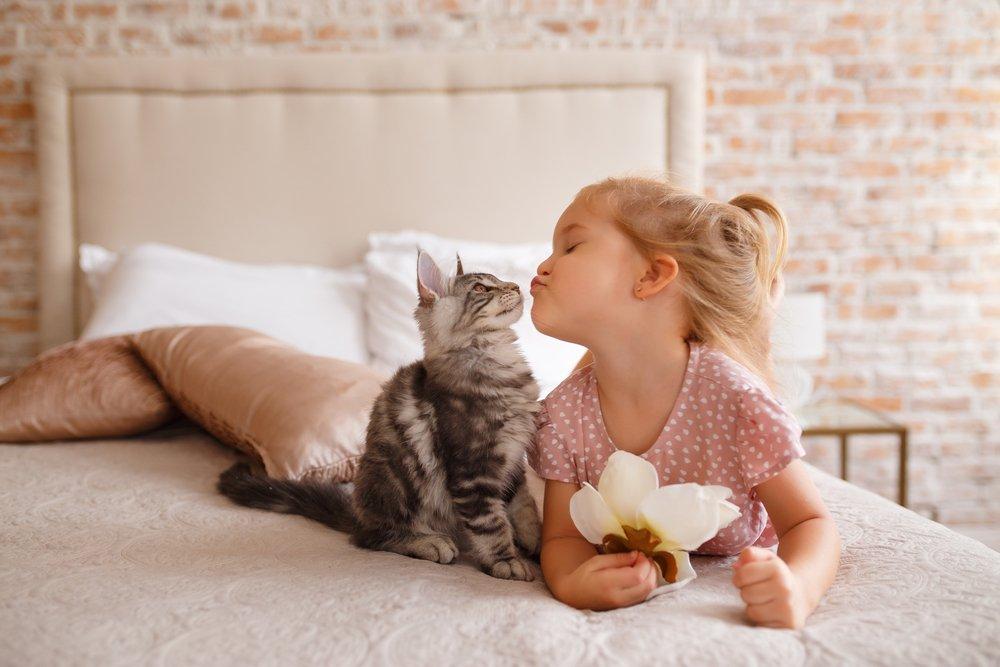Knuffelen met je kitten