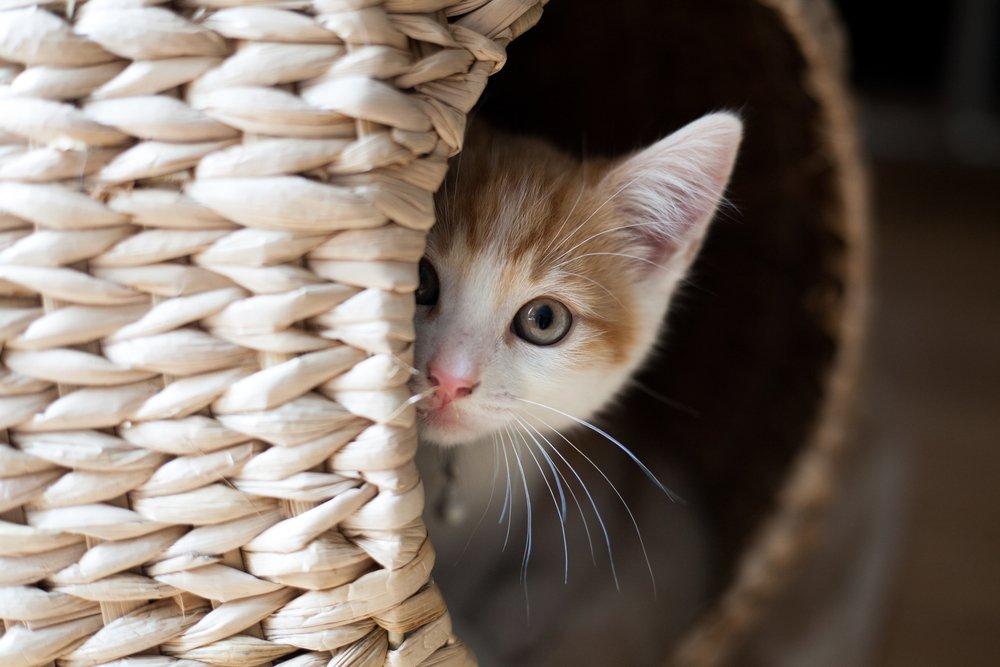 Kitten samen met andere huisdieren
