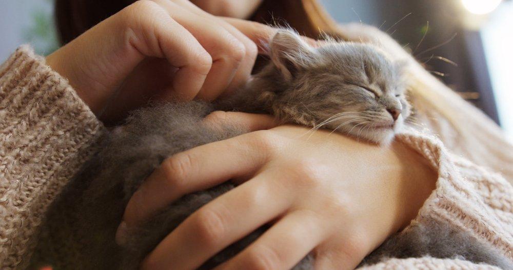 Kitten kopen of adopteren