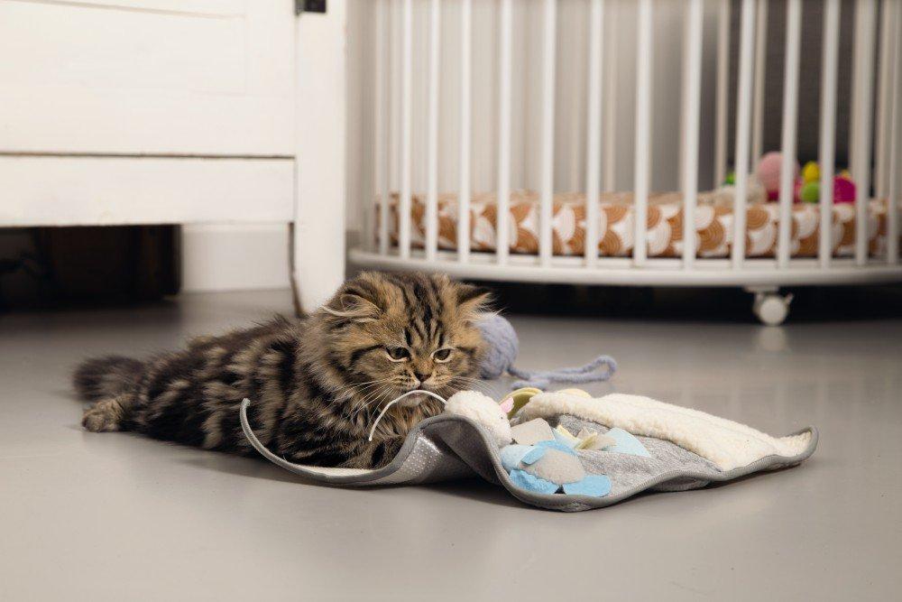 speelgoed kitten
