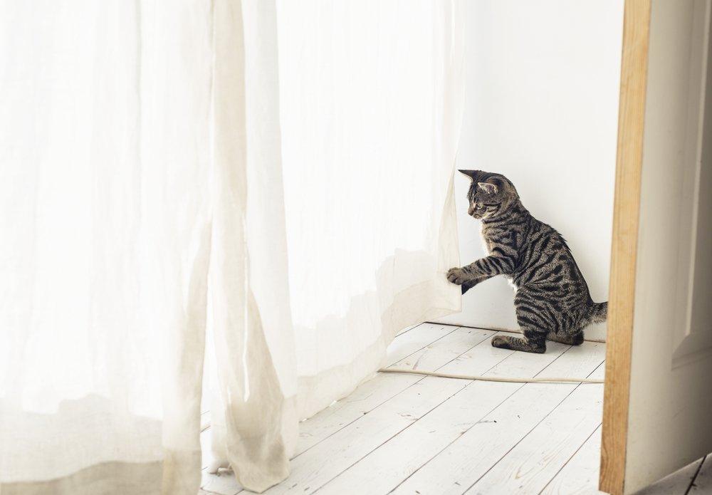 Kittenproof je huis
