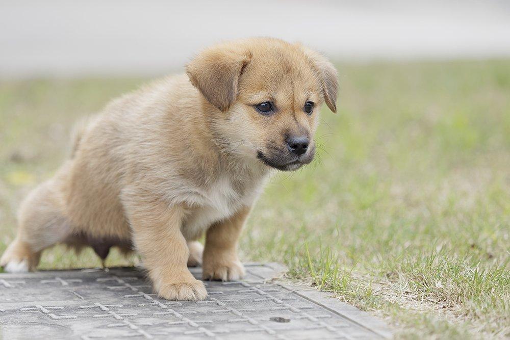 Pup leren buiten plassen