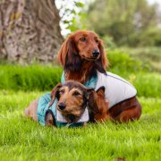Hondenjasje hondenjassen