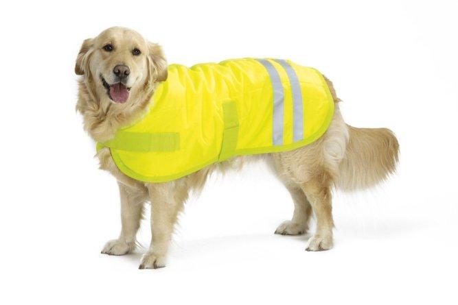 Hondenjassen